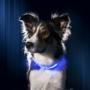 Kép 1/3 - LED kutya nyakörv világító kutyanyakörv Kék S